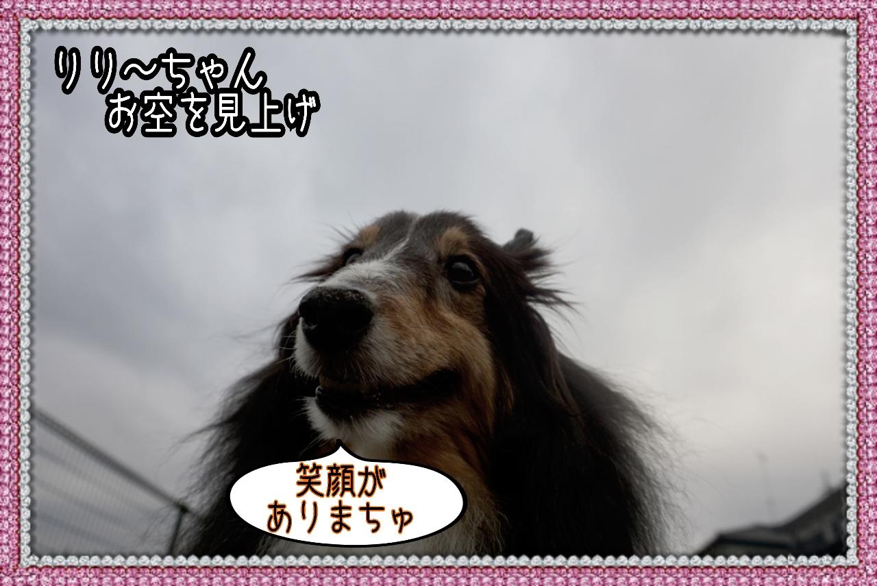 20141125014119_deco