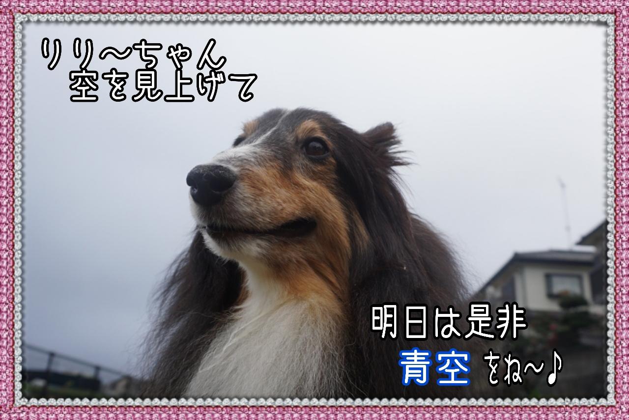 20141201134548_deco