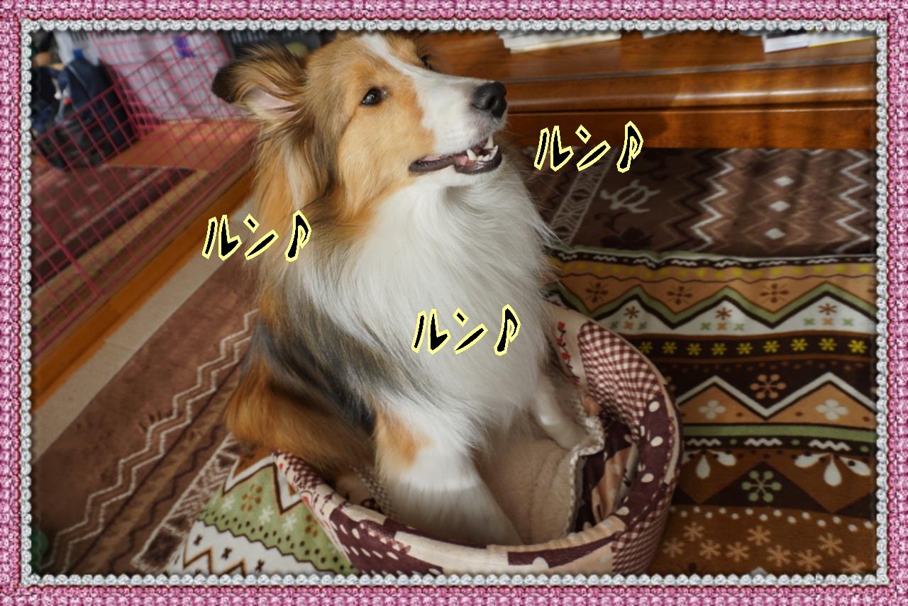 20141213115511_deco