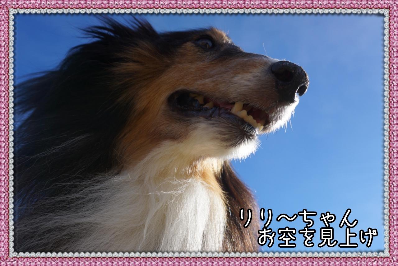 20141217104502_deco