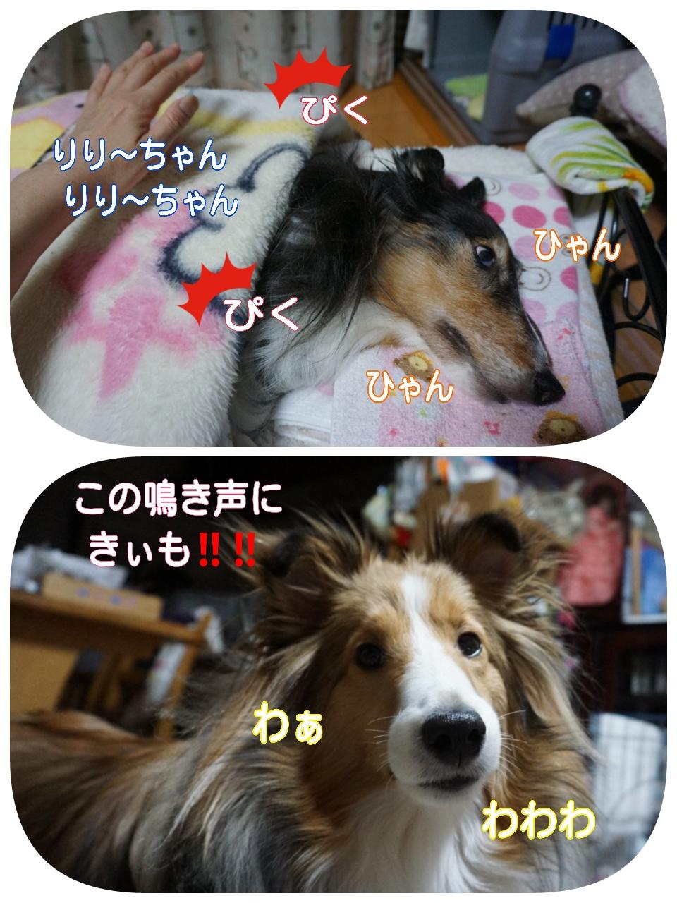 20150201010345_deco_2